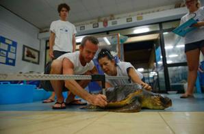 Mission de soutien de la fondation Octopus à la clinique pour tortues marines de Lampedusa en Italie.