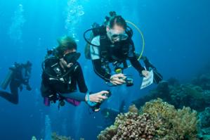 La nouvelle enquête sous-marine organisée par Objectif Atlantide en 2020 aux Philippines !