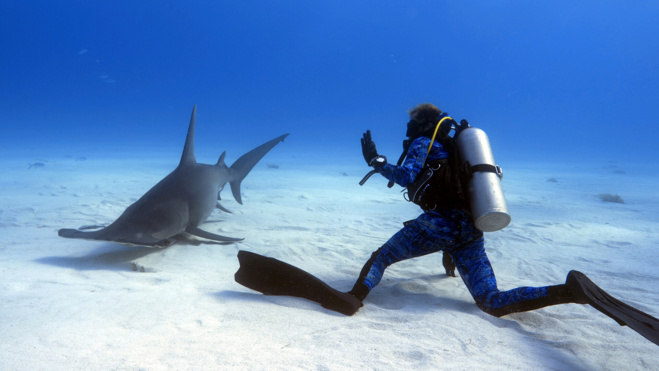 Série Lords of the Ocean - Épisode 04 : Avec les grands requins-marteau et les tigres aux Bahamas !