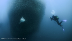 Dive Trip Adékua : le site qui révolutionne l'organisation des vacances plongée !
