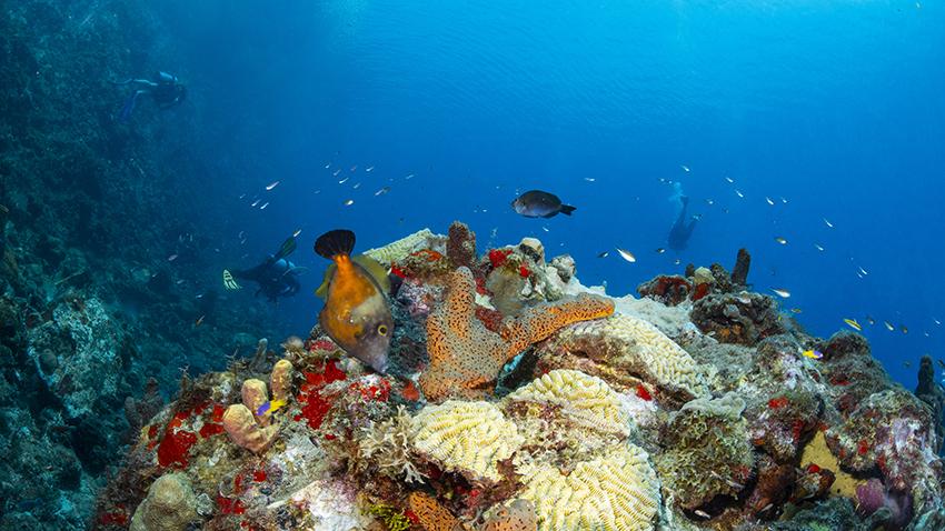 Plongée à la Dominique, l'île secrète des Caraïbes !