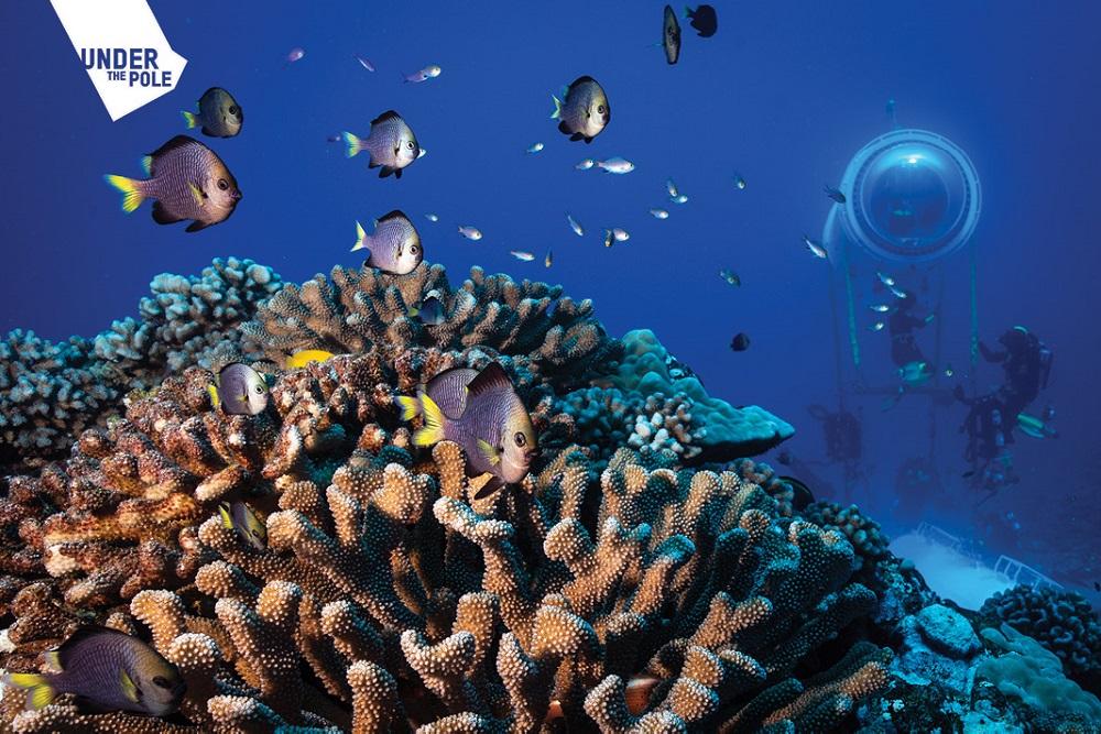"""Les dômes vitrés de la """"Capsule"""" permettent une observation scientifique du récif 24h/24."""
