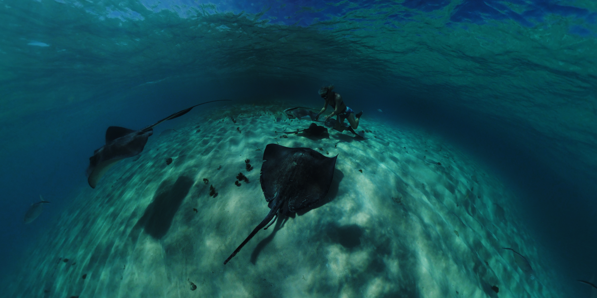 Salon International de la Plongée Sous-Marine 2020 : toutes les nouveautés !