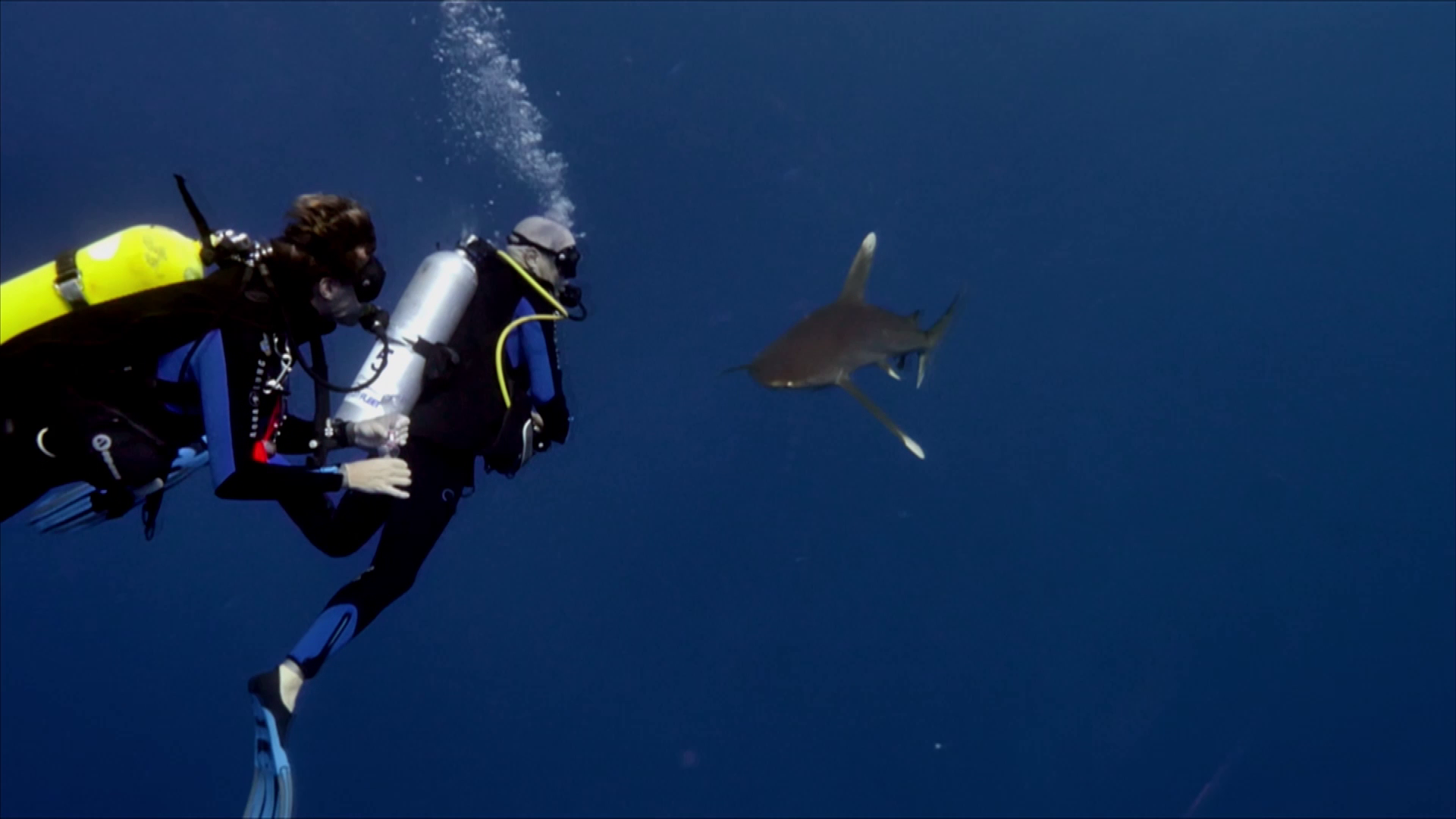 Face au requin océanique Carcharhinus Longimanus.