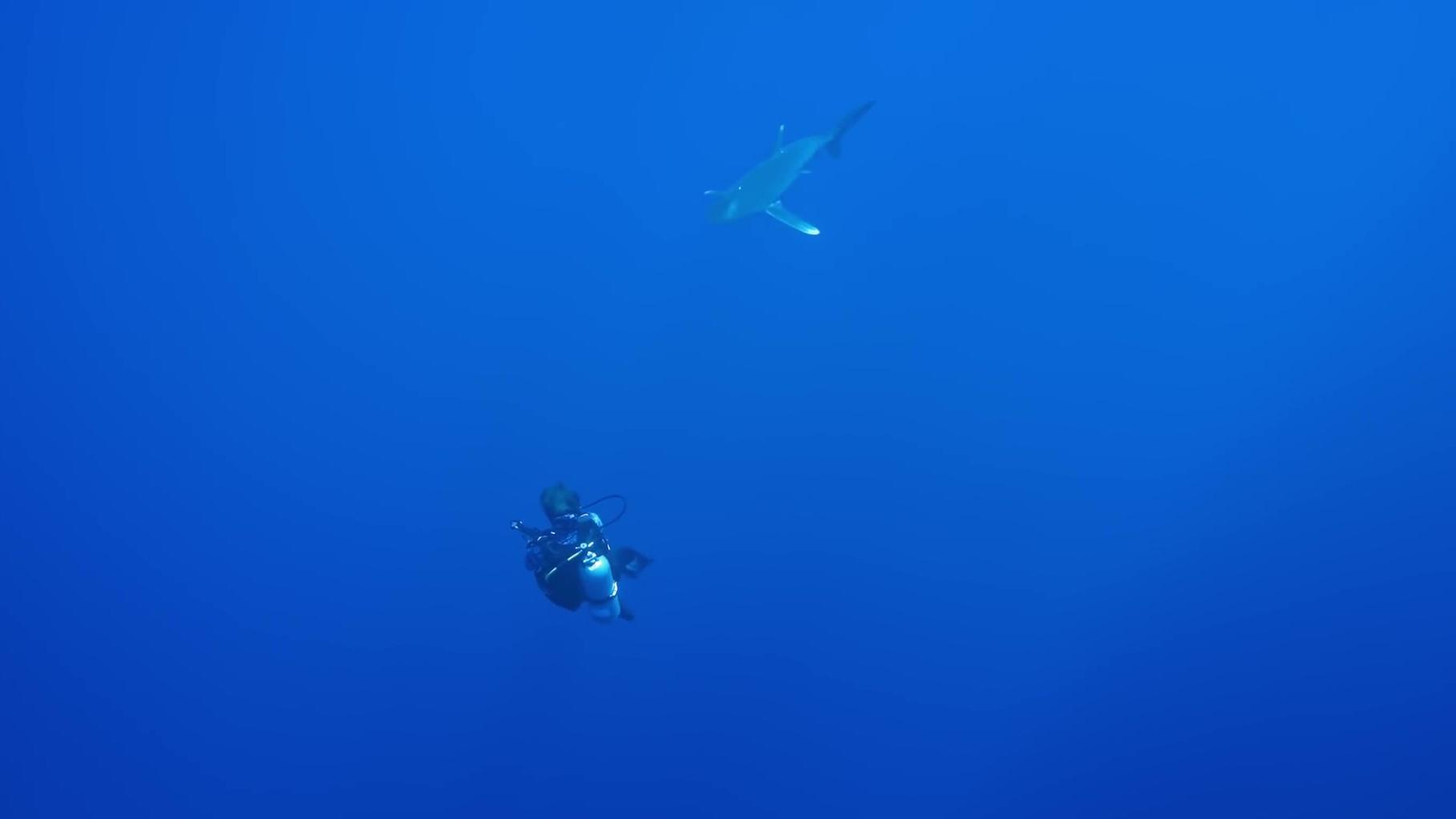 Série Lords of the Ocean - Épisode 05 : Avec les requins longimane et en apnée dans le Blue Hole !