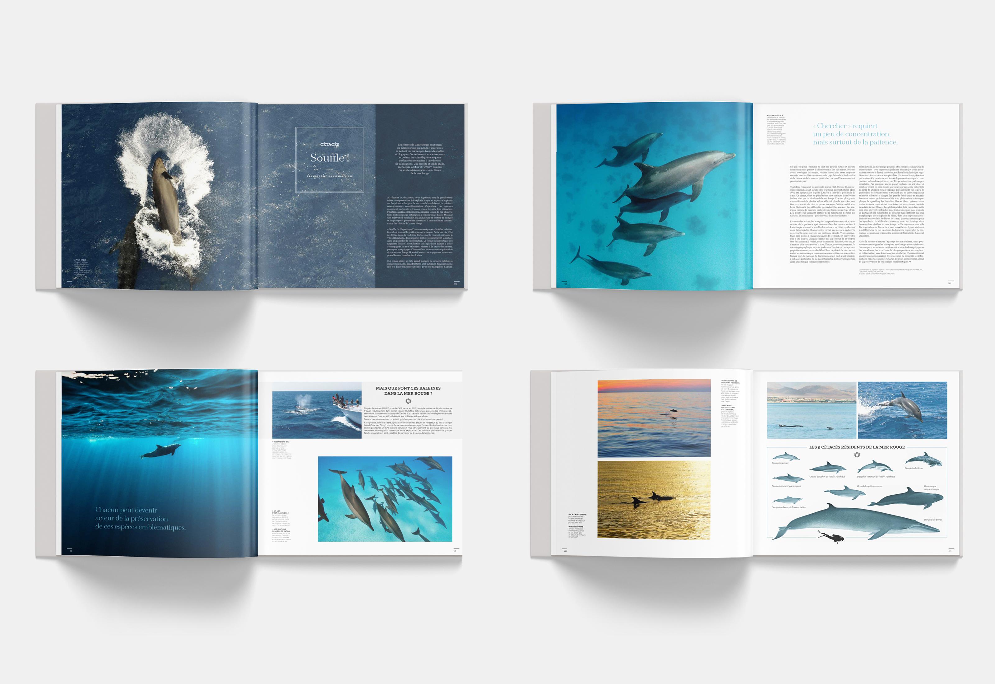 Mer Rouge - Eau Bleue : le livre de plongée de l'année !