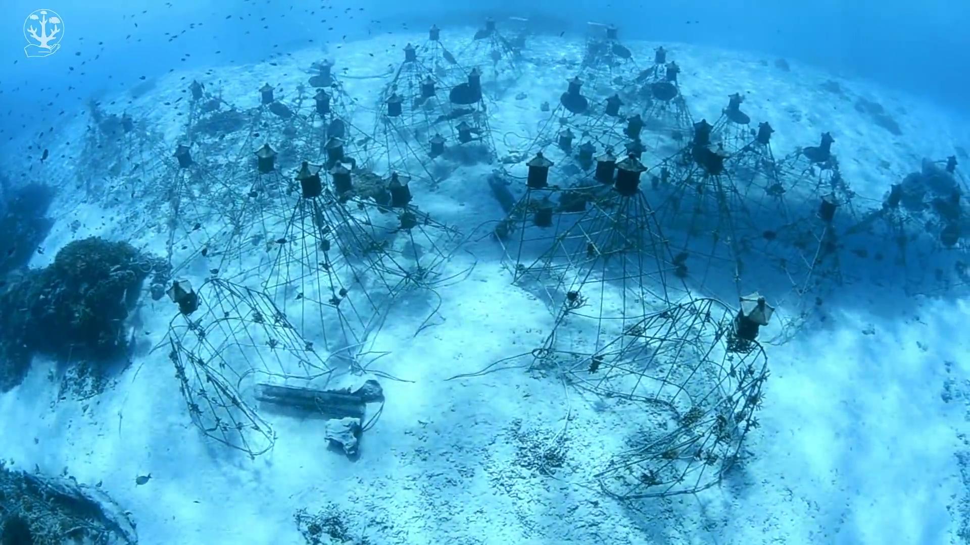 Le récif artificiel de Manta Reef