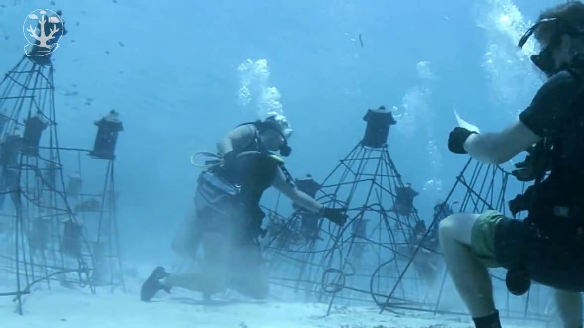 Les plongeurs de Coral Guardian
