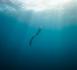 https://news.plongeurs.tv/Nous-vous-invitons-a-la-projection-VIP-de-la-serie-DEEP-_a59.html