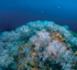 https://magazine.plongee-sous-marine.tv/Expedition-Gombessa-V-Planete-Mediterranee-Episode-11_a85.html