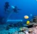 https://magazine.plongee-sous-marine.tv/Expedition-Under-The-Pole-Saison-5-Episode-2-immersion-des-ballasts-et-tests-de-la-Capsule_a99.html