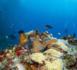 https://magazine.plongee-sous-marine.tv/Plongee-a-la-Dominique-l-ile-secrete-des-Caraibes-_a102.html