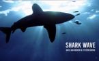 Shark Wave : le nouveau film avec Jan Kounen et Steven Surina !