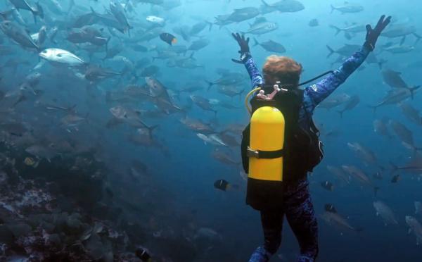 Série Lords of the Ocean - Épisode 07 : Plongées scientifiques dans la réserve de Malpelo !