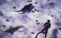 Série Lords of the Ocean - Épisode 03 : En apnée avec les requins bouledogue !